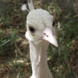 En İyisi Antalya Hayvanat Bahçesi