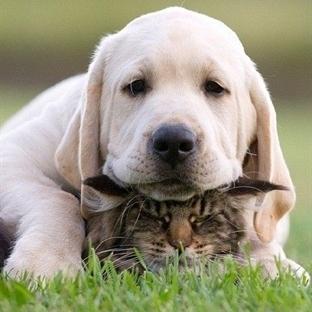 Kedi Ve Köpek Nasıl Bir Arada Yaşar?