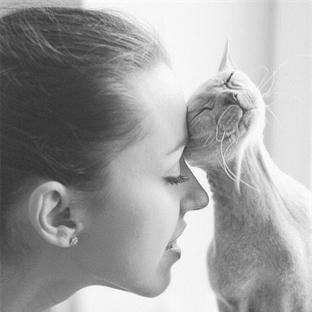 Kediler Neden Kendini Sevmeyenin Yanına Gider?