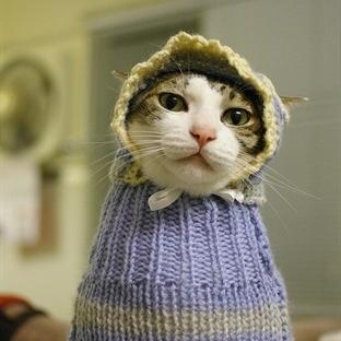 Kış Modasına Uygun Kedi Kıyafetleri