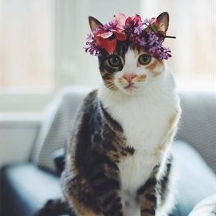 Kısırlaştırılmış Kedi Azar mı?