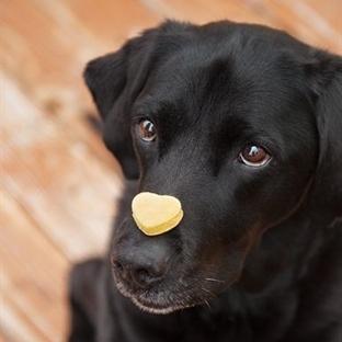 Köpekler İçin Yaş Mama Zararlı Mı?