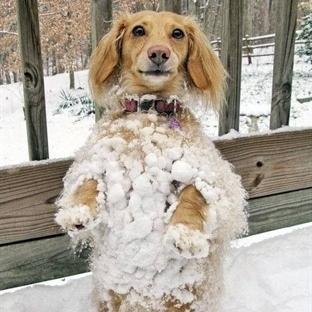Köpekler Üşür Mü?