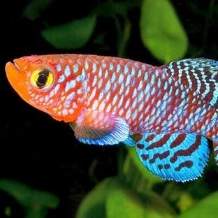 İnanılmaz Özellikteki 8 Balık