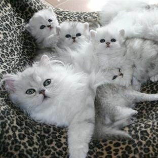 14 Anne Kedi Ve Bebişleri
