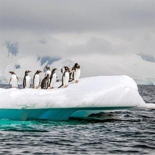 Antartika'dan Doğa Harikası Kareler