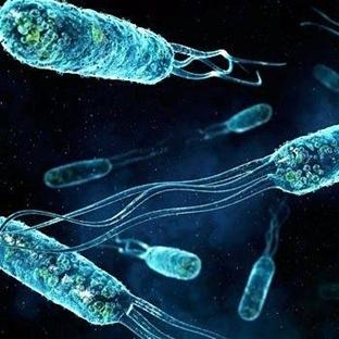 Bakteri Nedir?