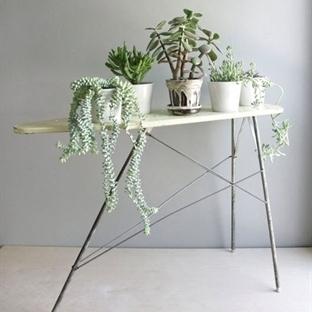 Bitkilerle Dekorasyon