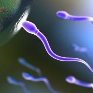 Kaliteli Sperm ve Yumurta İçin Tavsiyeler