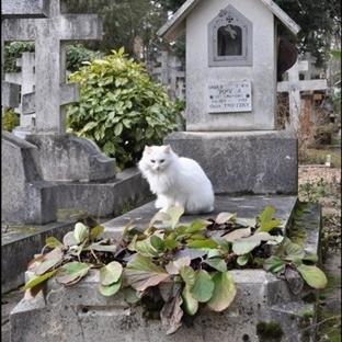 Kediler Ölümü Hisseder Mi?