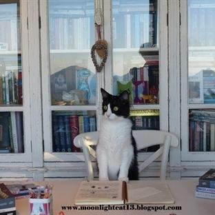 Kedili Kitaplar ♡2♡ Videom Yayında ^-^