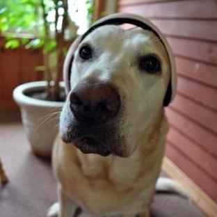 Köpek Fobisi Nedir?