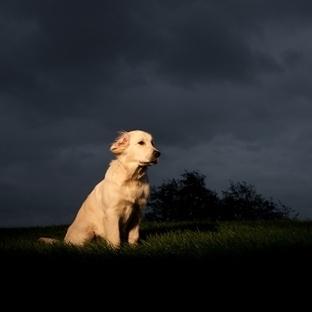 Köpekler Gece Görebilir Mi?