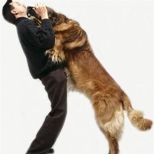 Köpekler Neden İnsanların Üstüne Atlar?
