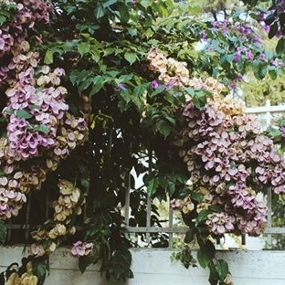 Sonbahar Güzellemesi: Büyükada