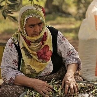 'Anadolu Zeytinyağları Projesi' ile Natürel Zeytin