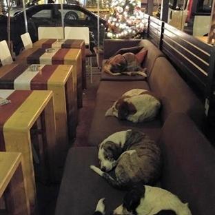 Gündüzleri Cafe Geceleri Köpeklere Ev