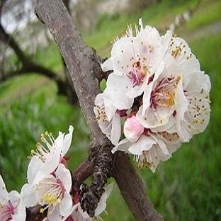Bahçemdeki Bahar!!!