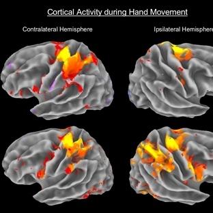 Beynimizin yüzde onunu kullandığımız efsanesi