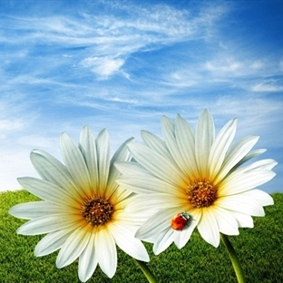 Çiçek Aşkın Dilidir
