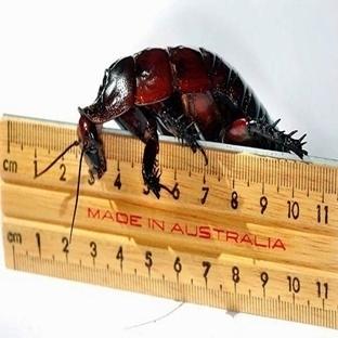Garip Bir Soru; Böcekler Şişmanlar Mı?