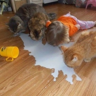 Kendilerini evcil hayvan sanan bebekler