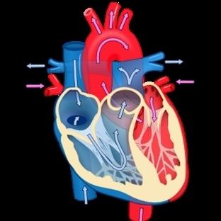 İlk Kez Kök Hücre Tedavisiyle Kalp İyileştirildi