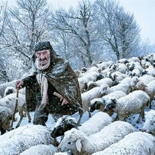 2015 Sony Dünya Fotoğorafçılık Ödüllerinden Karele
