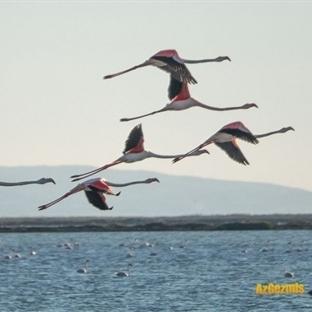 Gediz Deltası, İzmir Kuş Cenneti