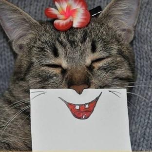 Kedi ve eğlenceli yüz ifadesi çizimleri