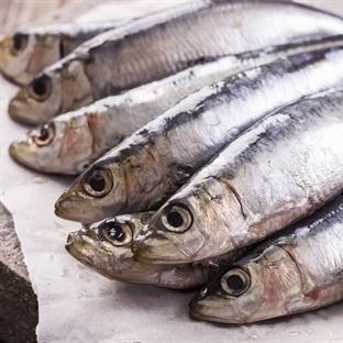 Kleine Fische: Sardinen und Sardellen im Vergleich