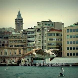 İstanbul Boğazında Kutup Martıları!