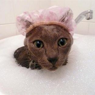 Su Aşkıyla Yanıp Tutuşan 14 Sevimli Kedi