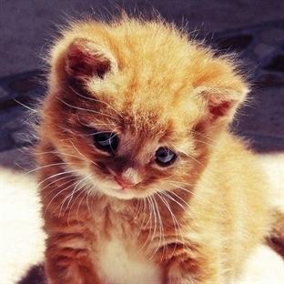 """10 fotoğrafla """"sokakta kalmaması"""" garanti kediler"""