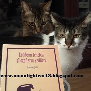 Kedilerin Felsefesi Filozofların Kedileri - Federi