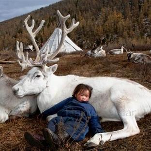 Moğolistan'daki Rengeyiği İnsanları