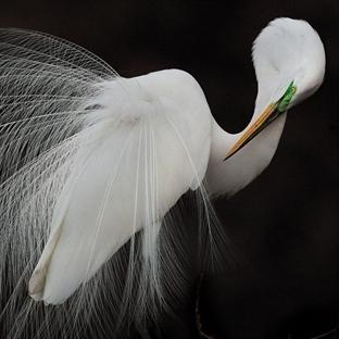 Audubon 2015 Fotoğrafçılık Ödülleri sonuçlandı