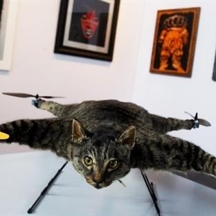 Drone ile Çekilen Çarpıcı Fotoğraflar
