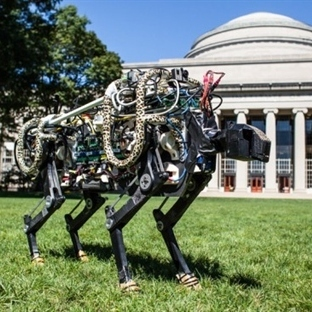Hem koşan hem de zıplayan robot Çita geliştirdiler