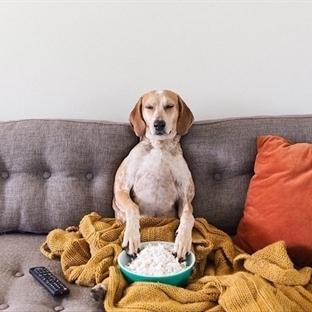 Humphrey'in Dört Ayaklı Dostu Sevimli Köpek