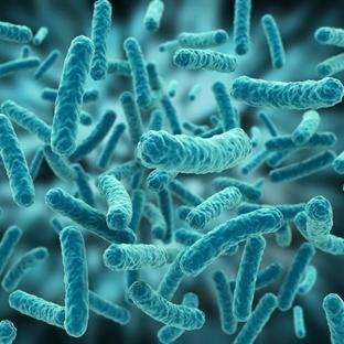 Zombi bakteriler keşfedildi
