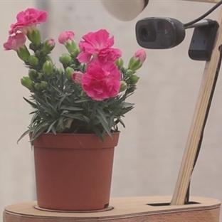 Özçekim Çiçeği