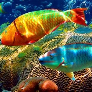 Cennetin Dünyadaki İzdüşümü - Tahiti