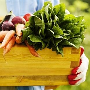Kan şekerini hızlı etkileyen sebzeler