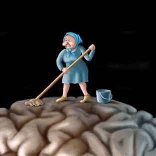 Beynimizin Temizlik Sistemi Keşfedildi