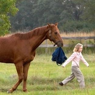 Atları konu edinen 8 film