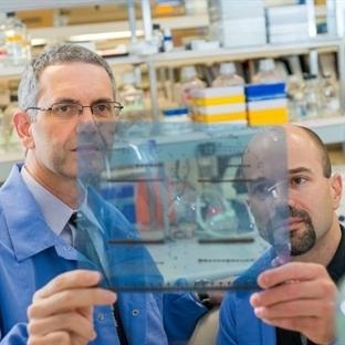 Kanser Hücrelerini Normalleştirecek Buluş Yapıldı