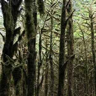 Karadeniz Maceramız: Çinçiva ve Şimşir Ormanları
