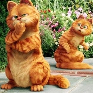 Kedileri konu edinen en iyi 8 film