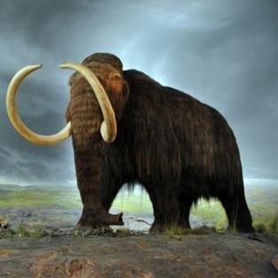 Mamutlar Ani Bir İklim Değişimi Sonucu Yok Oldular